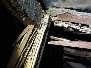 Termite Pest Control Penrith