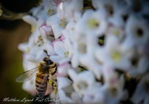 penrith bee removal