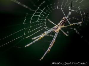 Spider Control Penrith